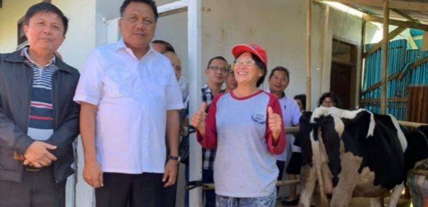Gubernur Dorong Pengembangan Peternakan Sapi Perah Tampusu