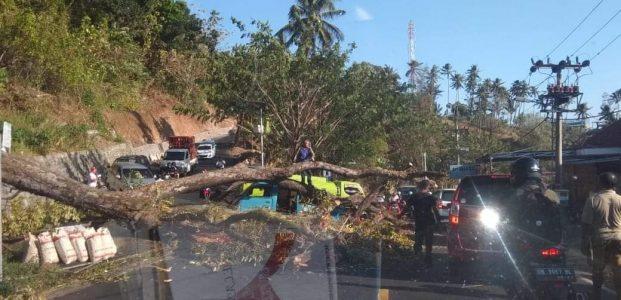 Pohon Tumbang Menimpa Kendaraan di Ruas Jalan Manado-Tomohon