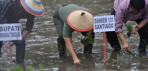 Dinas Pertanian Gandeng Kodim 1302/Minahasa Tanam Padi Perdana