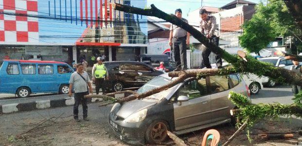 Dua Dokter Muda Luput dari Maut, Ditimpa Pohon Tumbang