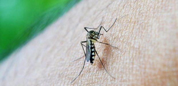 Pemprov Sulut Gulir Program Eliminasi Malaria